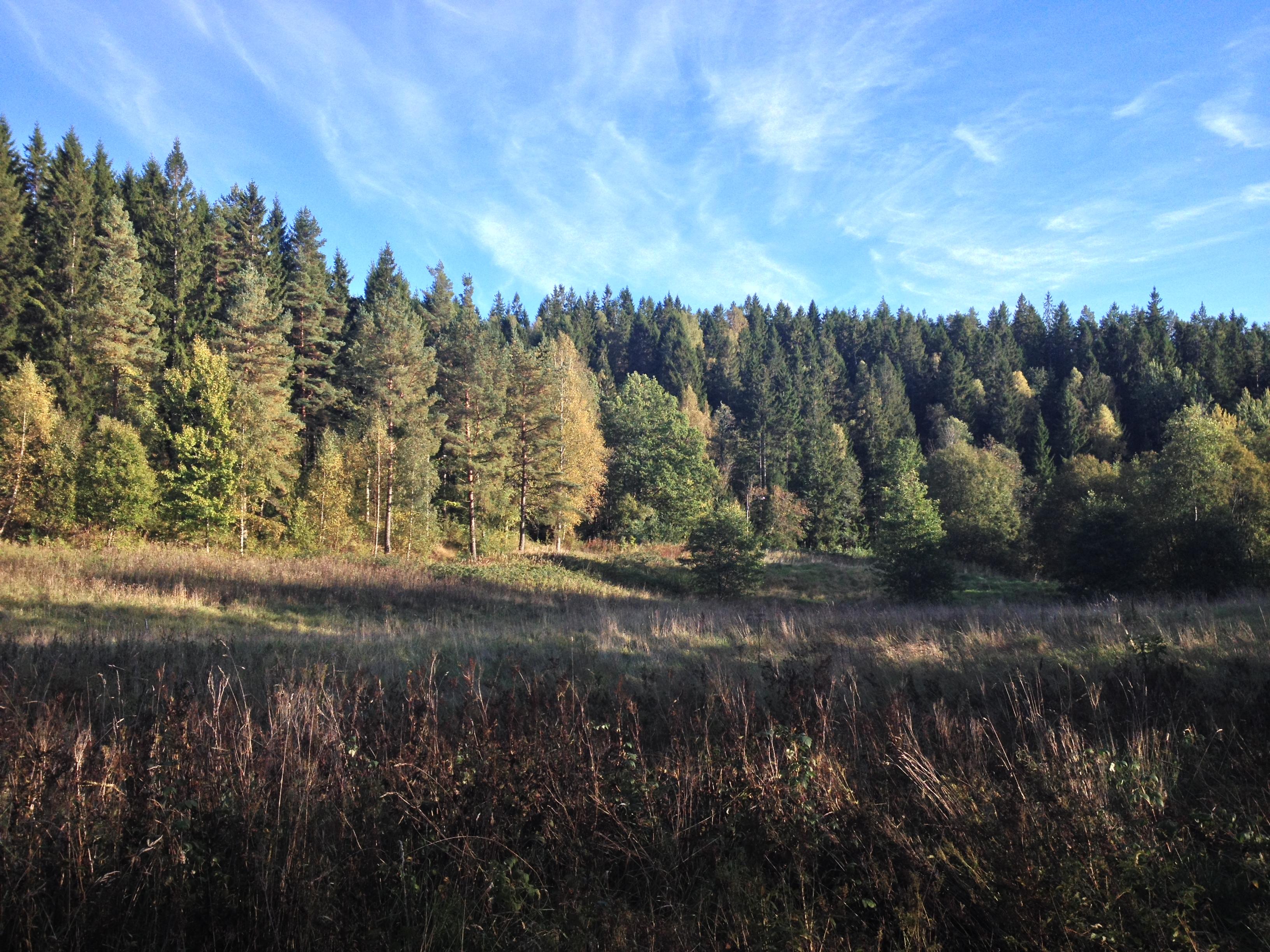 Skog <3